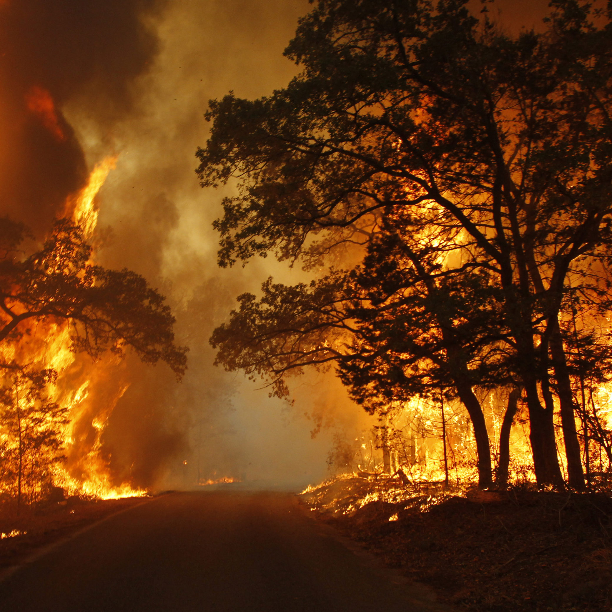 Flames engulf a road near Bastrop State Park as a wildfire burns out of control near Bastrop, Texas September 5, 2011. An estimated 1,000 homes are being threatened in Bastrop County, just east of Austin, as a 14,000-acre (5700-hectare) wildfire rages out of control, causing evacuations.  REUTERS/Mike Stone (UNITED STATES - Tags: ENVIRONMENT DISASTER)