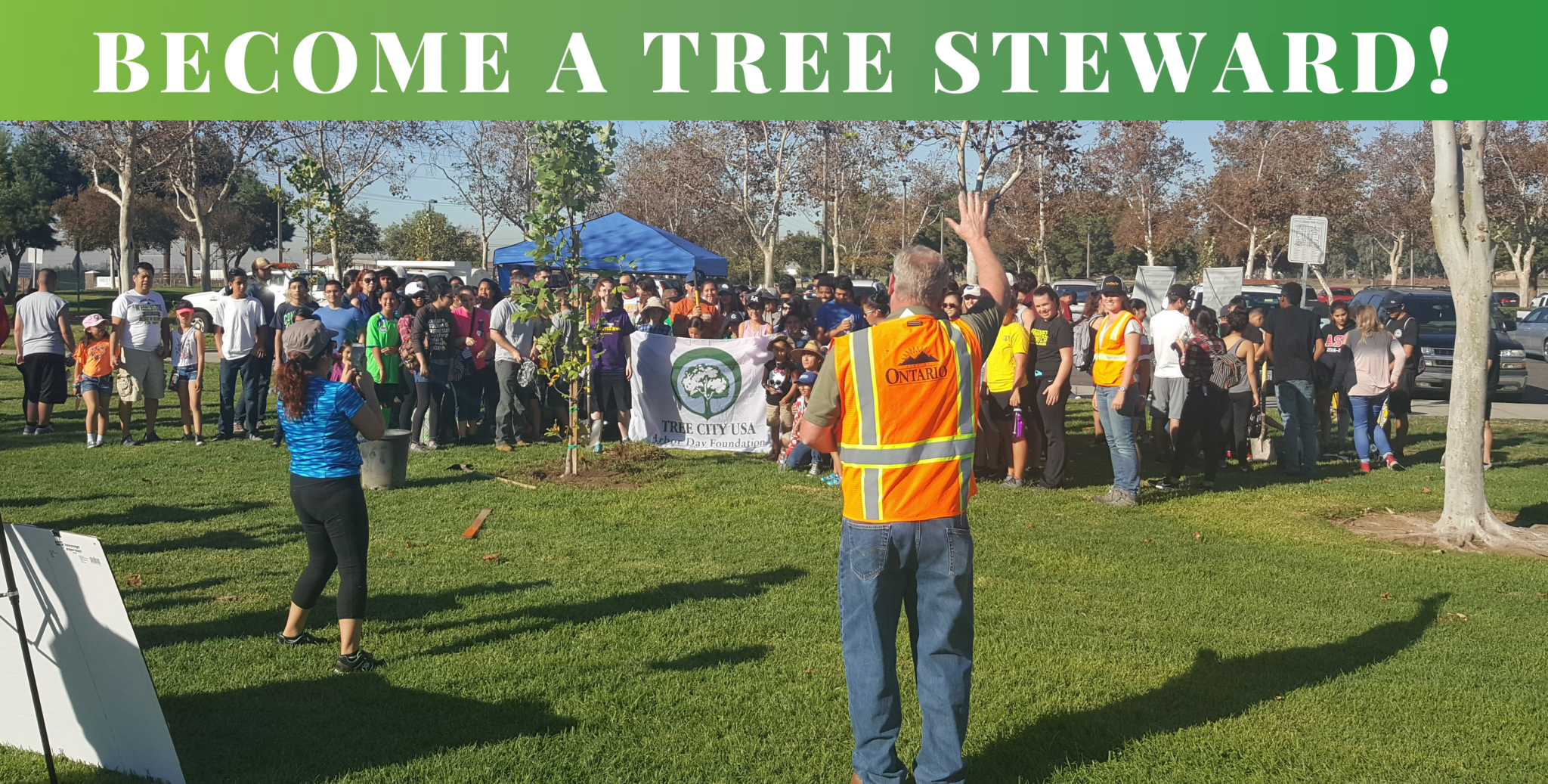 Become a Tree Steward!